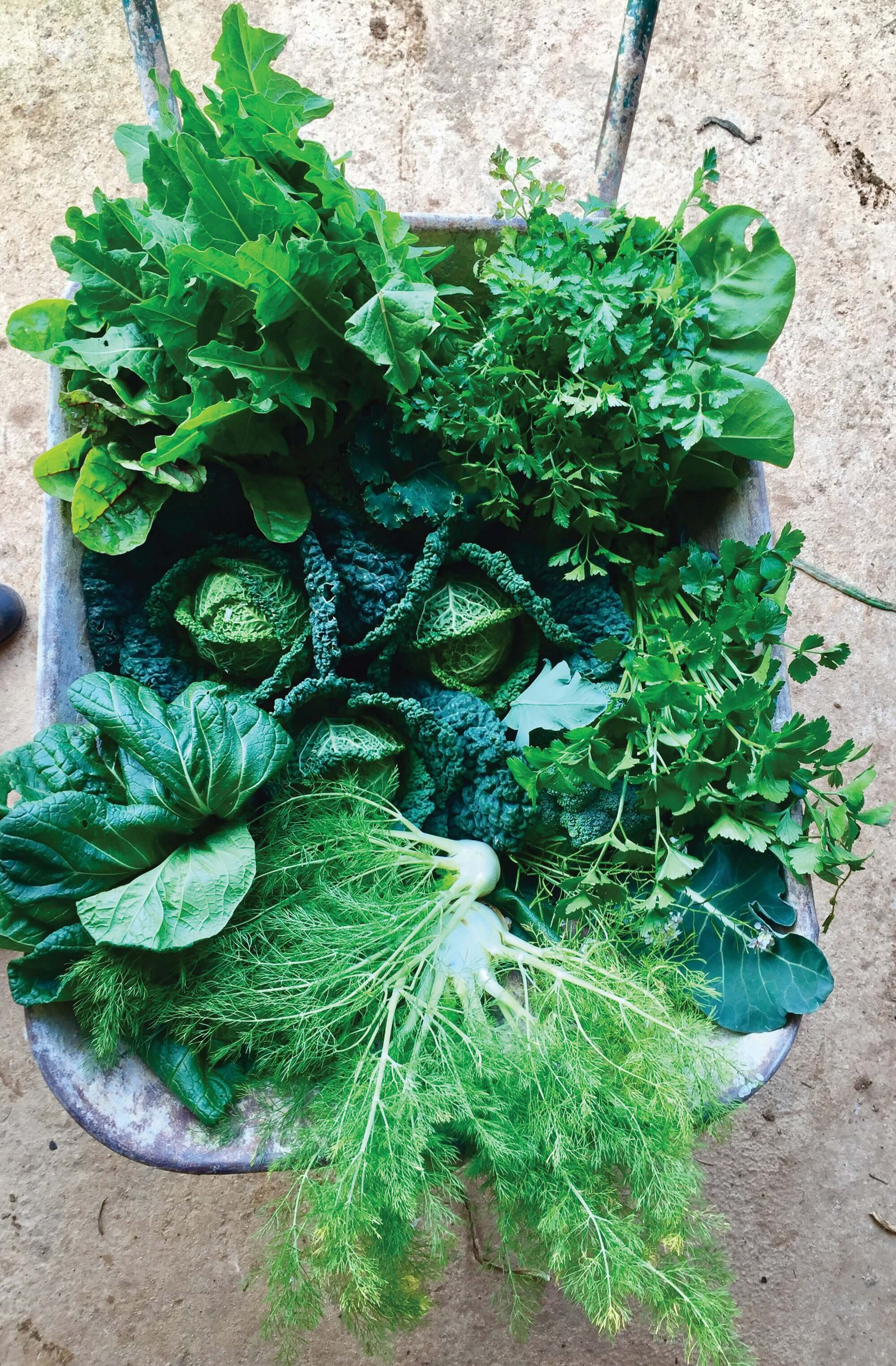 Eat Local – Eat Sustainable